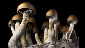 Campaign to decriminalize psychedelic mushrooms in Denver says it has enough signatures to make the ballot