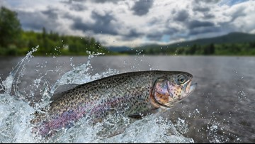 You can fish for free in Washington and Idaho this weekend
