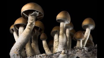 Denver becomes first city in the U.S. to decriminalize 'magic mushrooms'