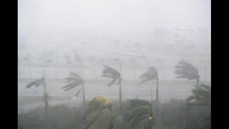 hurricane irma miami palm tree wind