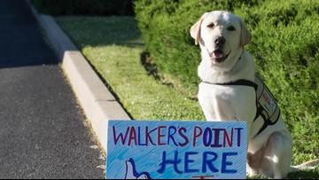 Former President Bush gets a service dog named 'Sully'
