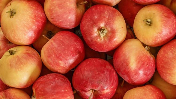 What is an apple maggot quarantine in Washington?