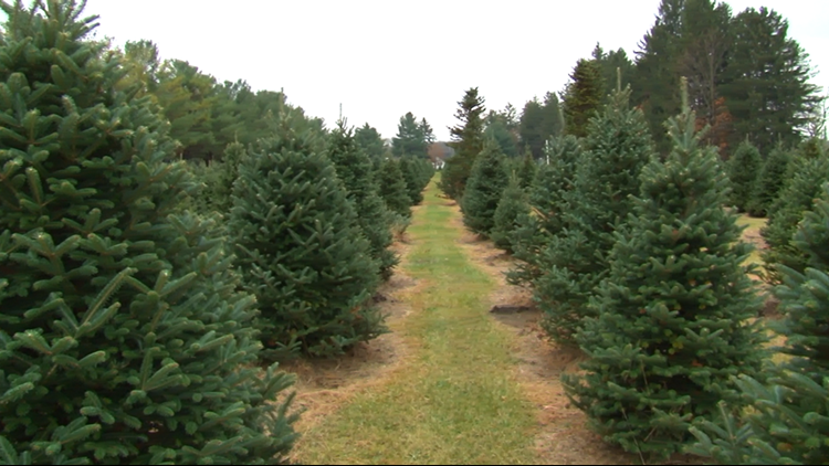 Christmas is months away but a Green Bluff tree farm is already preparing