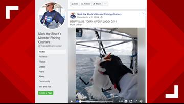 'PETA THIS!': Florida wildlife officials investigate video of person shaking seabird