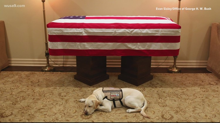 President George HW Bush's former service dog Sully honored with hometown statue   Get Uplifted