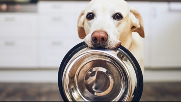 Grain-Free Grief | FDA investigating link between grain-free food and heart failure in dogs